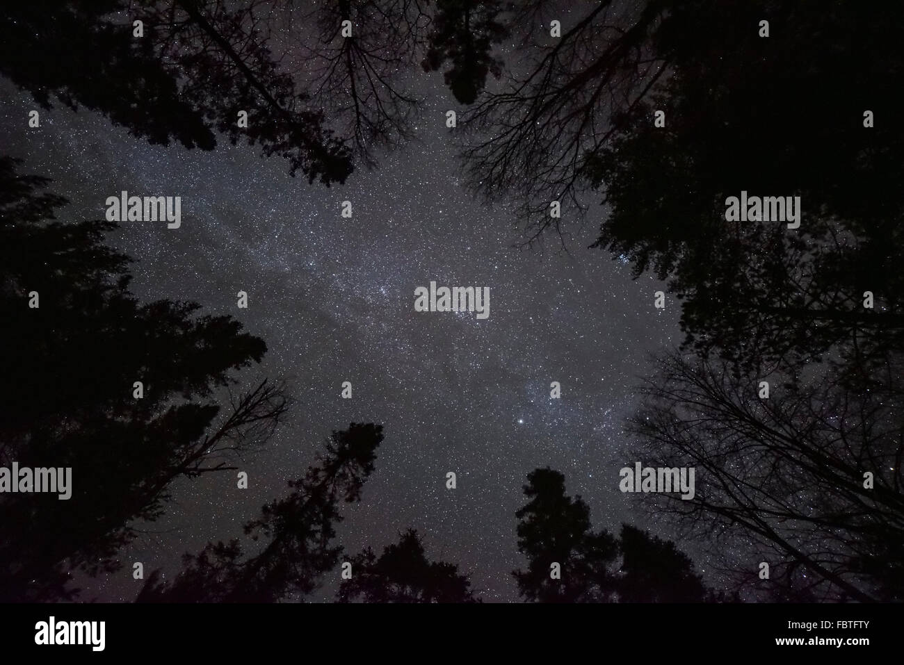 Straight up view of the many stars Milky Way Galaxy through a forest of trees.  The night sky never looked better. - Stock Image