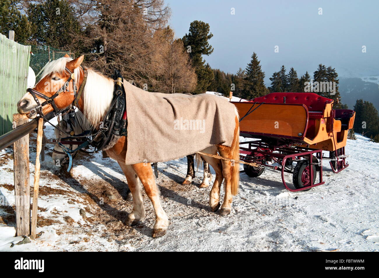 Horse Sledge in Dolomiti, Italy - Stock Image