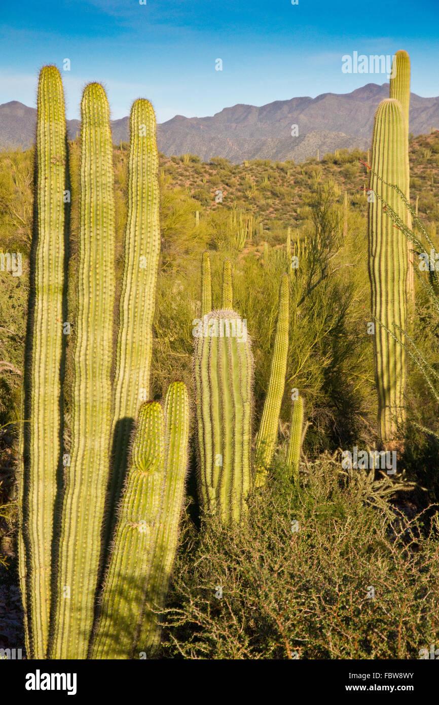 Desert's Last Light - Stock Image