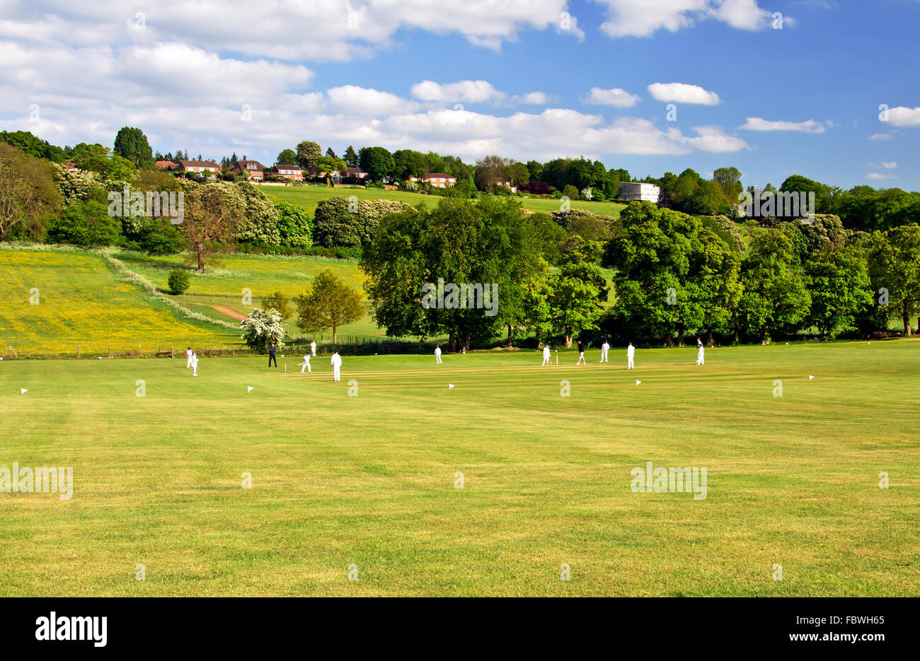 Cricket on a summer evening Stock Photo