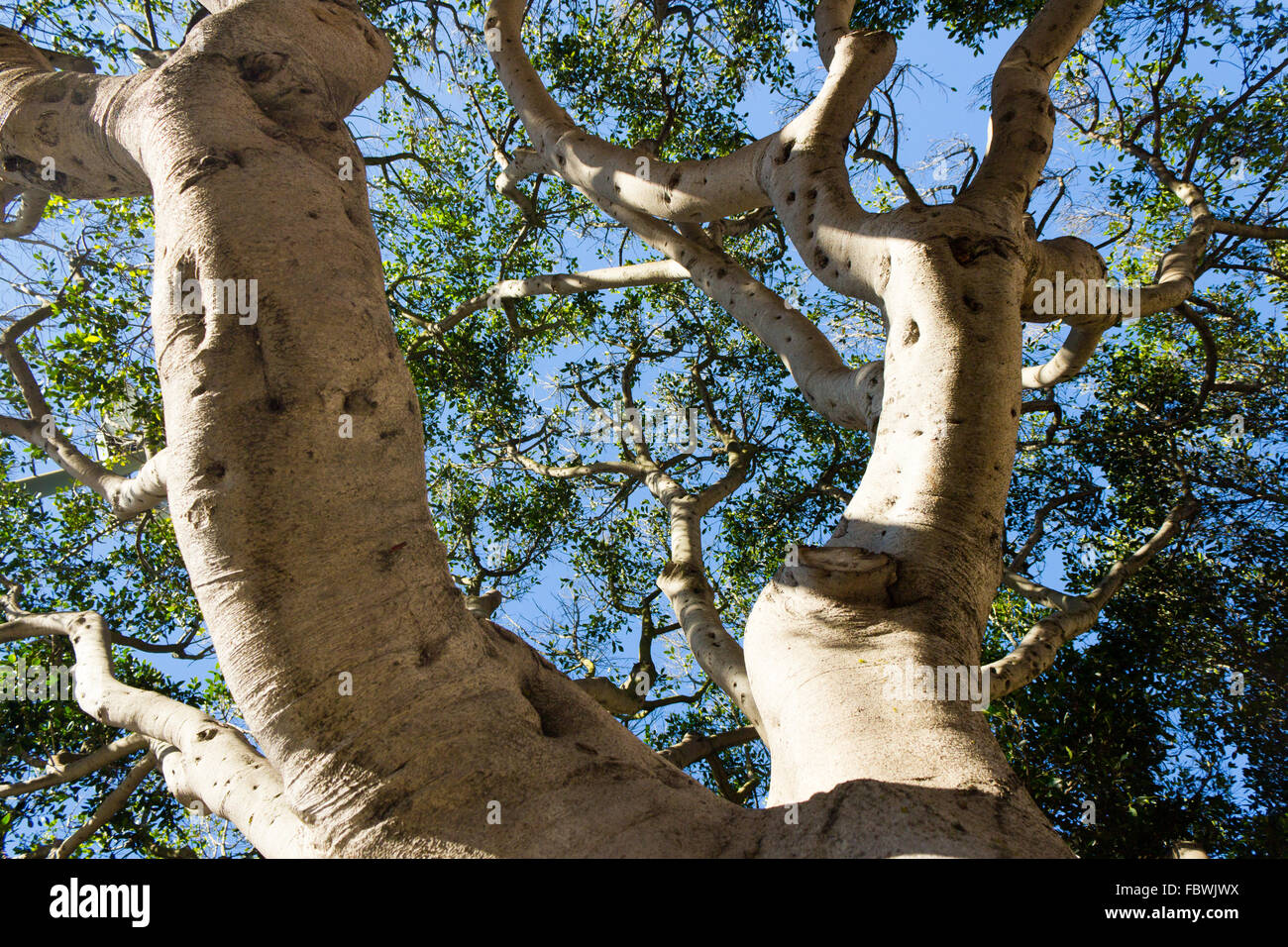 Tree branches reaching for the sky - Stock Image