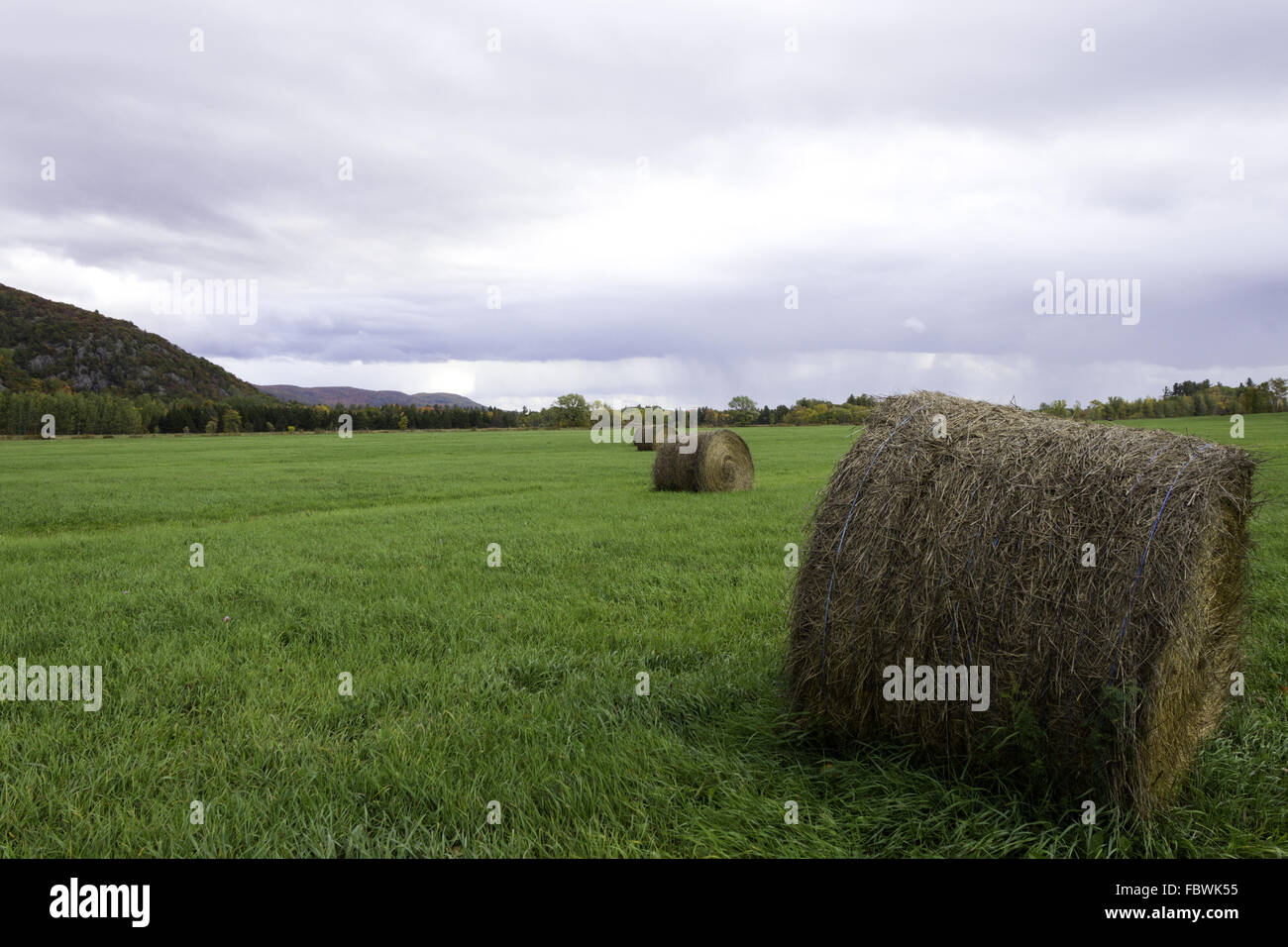 Farm field with bails of hay - Stock Image
