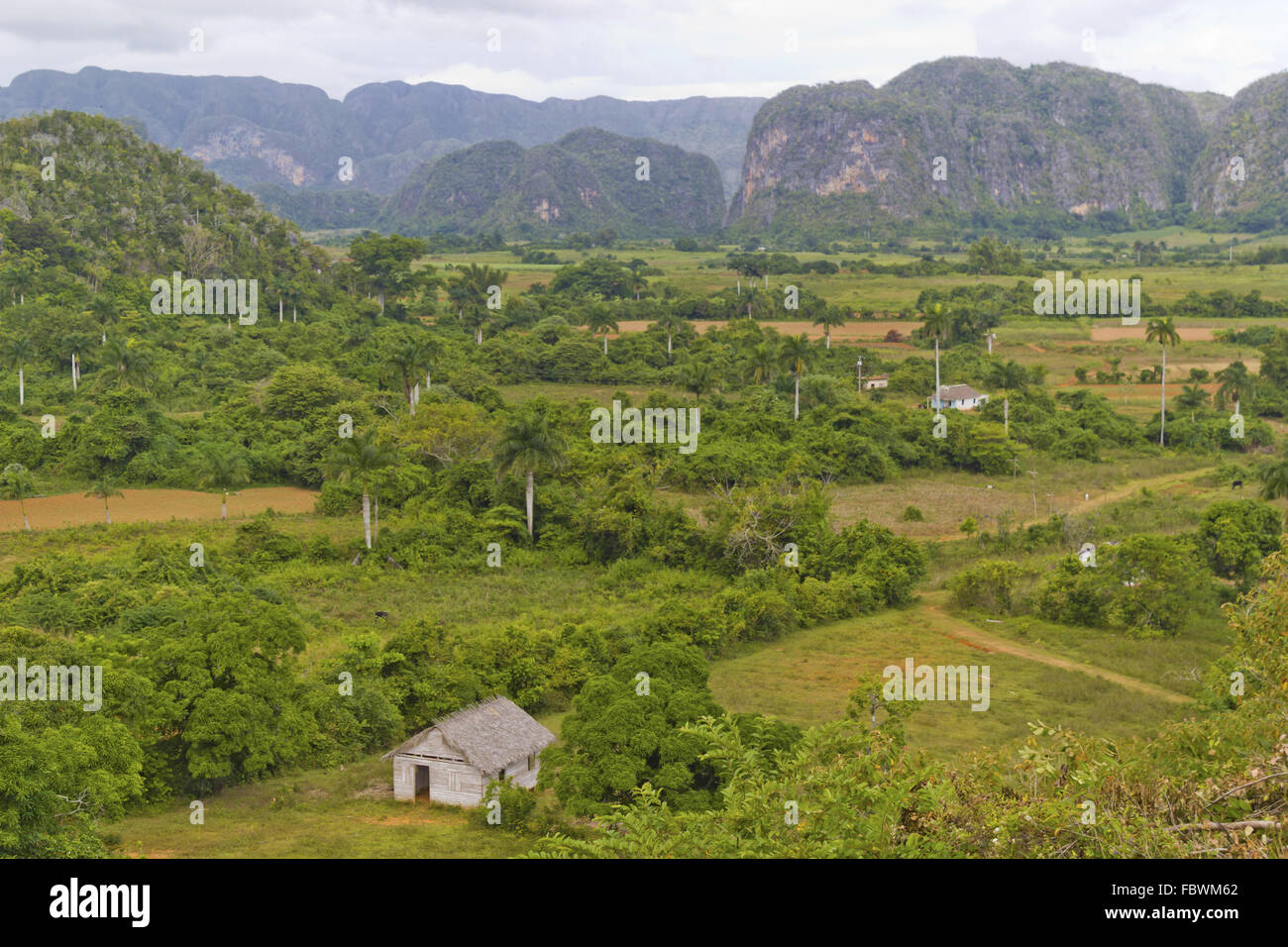View over the vally of Vinales - Stock Image