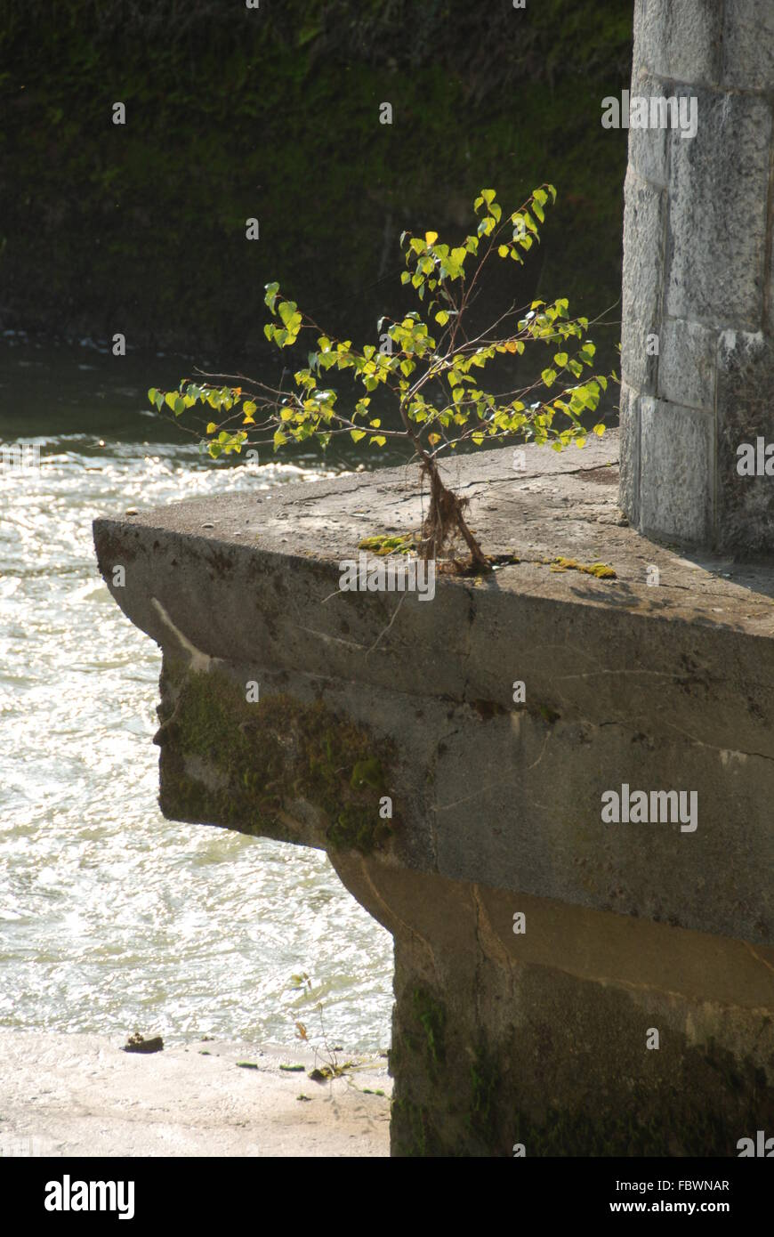 Tough tree - Stock Image