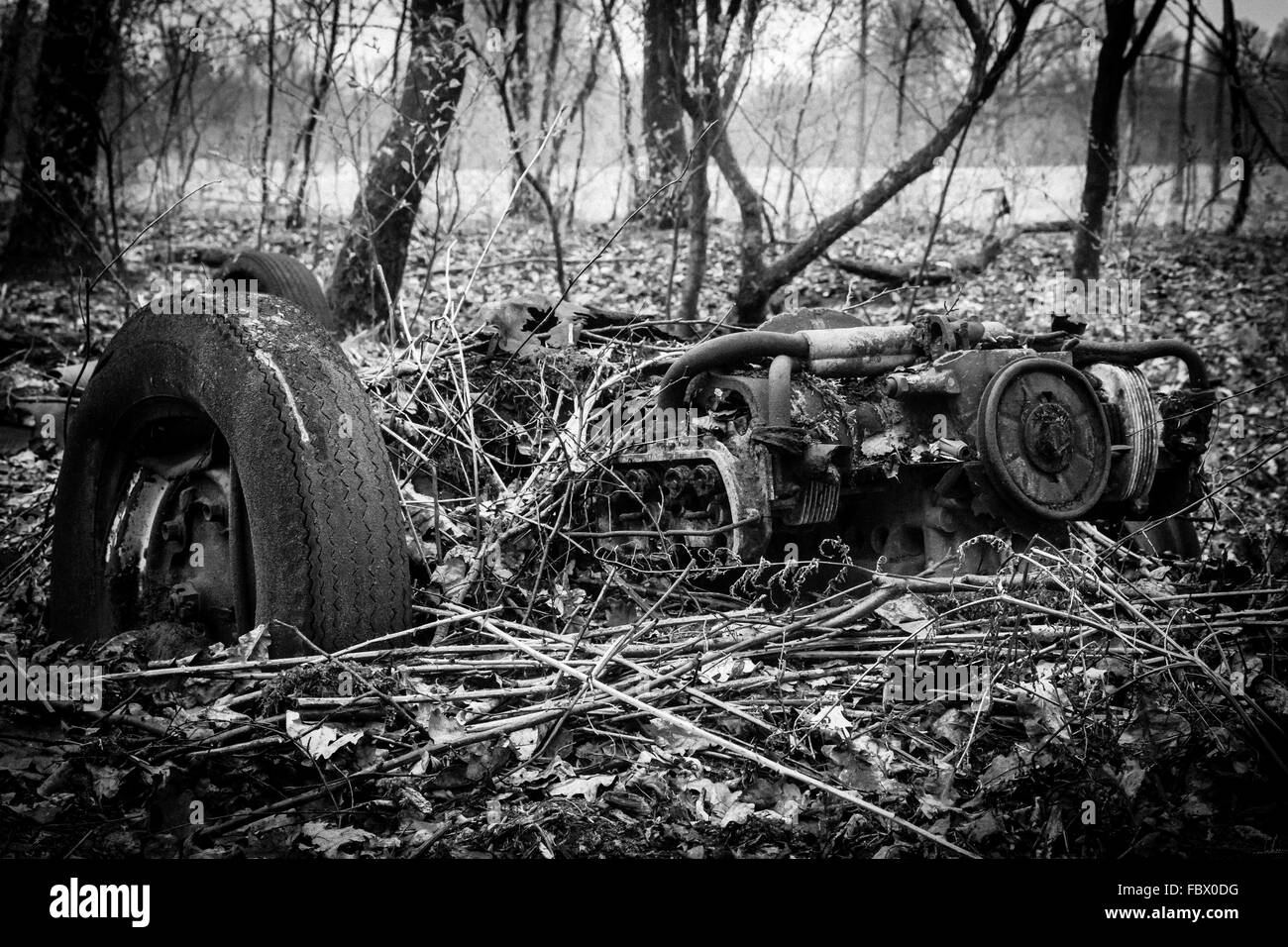 Car wreck in forest - Stock Image