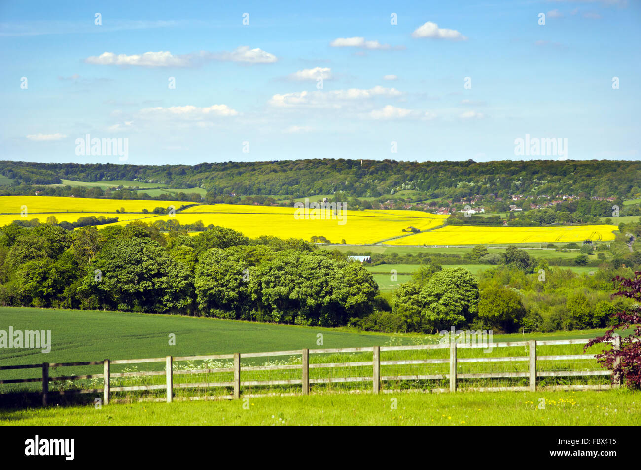 The Chilterns in Spring - Stock Image