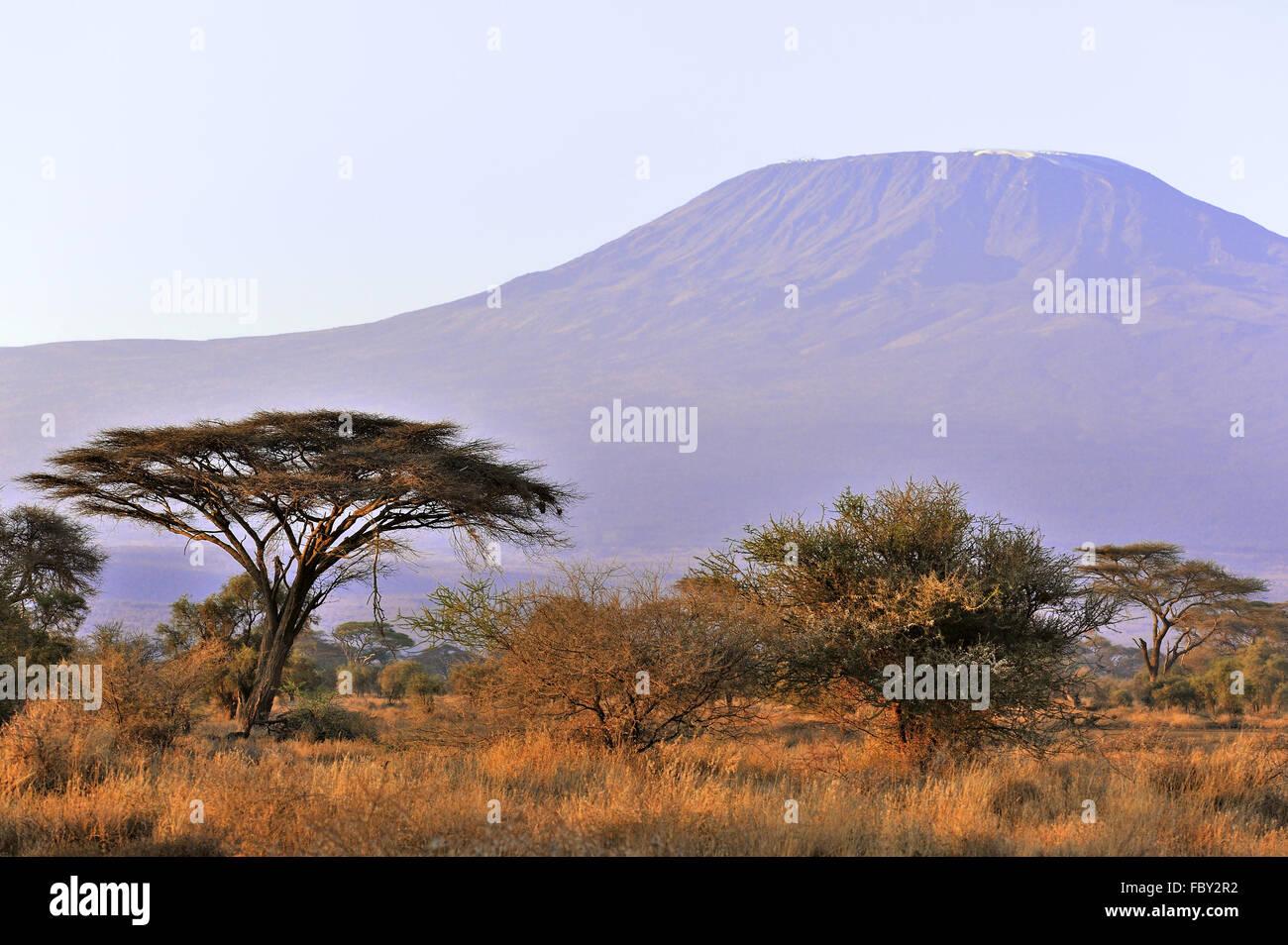 Mount Kilimanjaro at sunrise - Stock Image