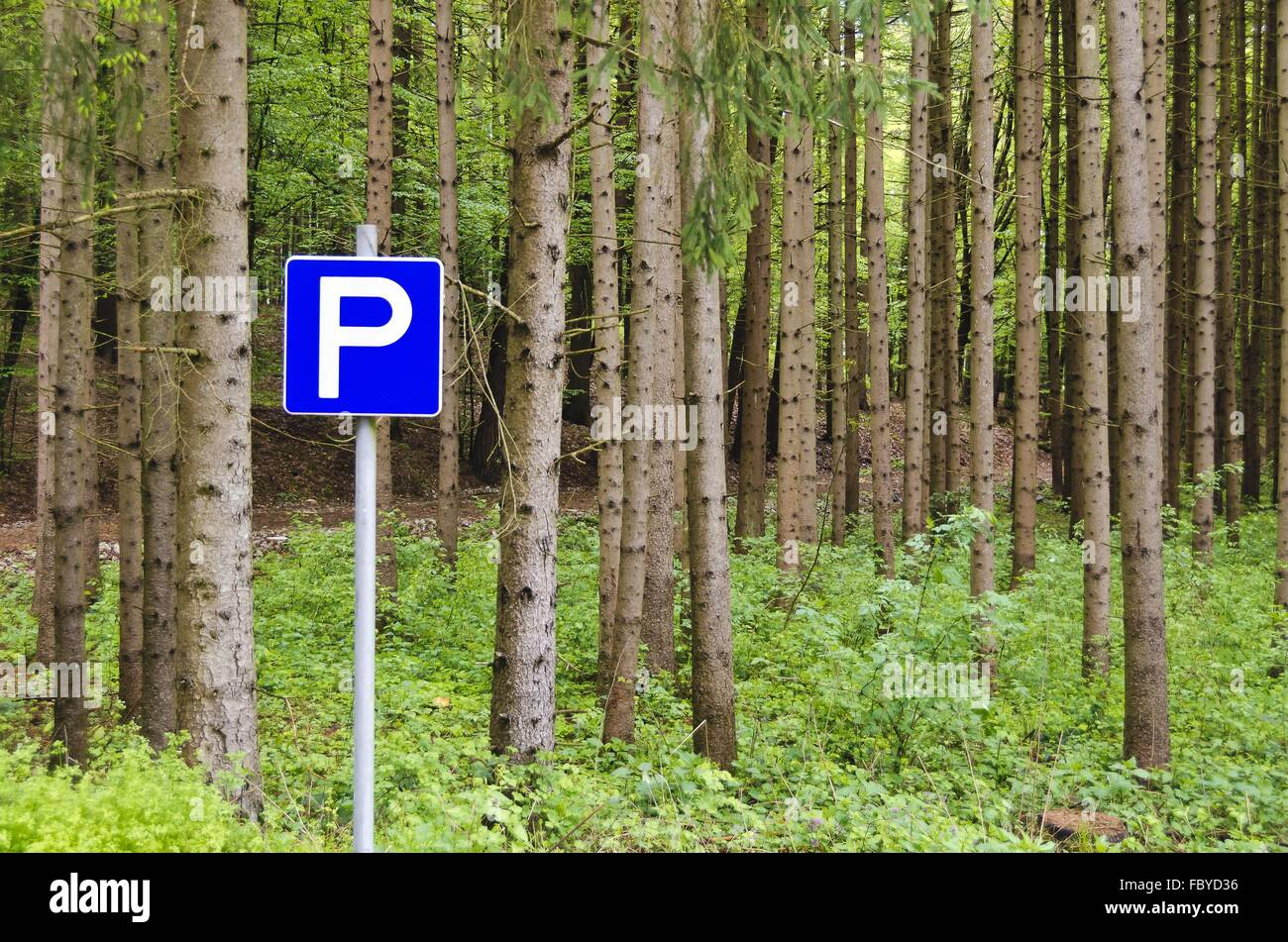 conifer forest with road sign - Stock Image