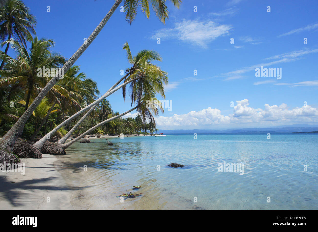 perfect caribbean beach - Stock Image