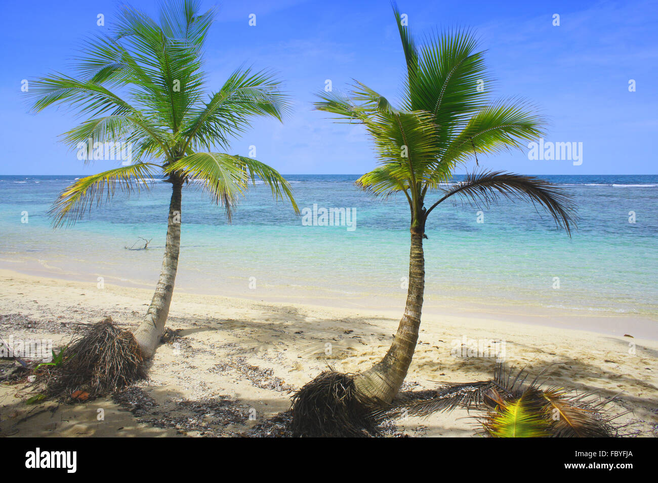 palm leaf at caribbean beach - Stock Image