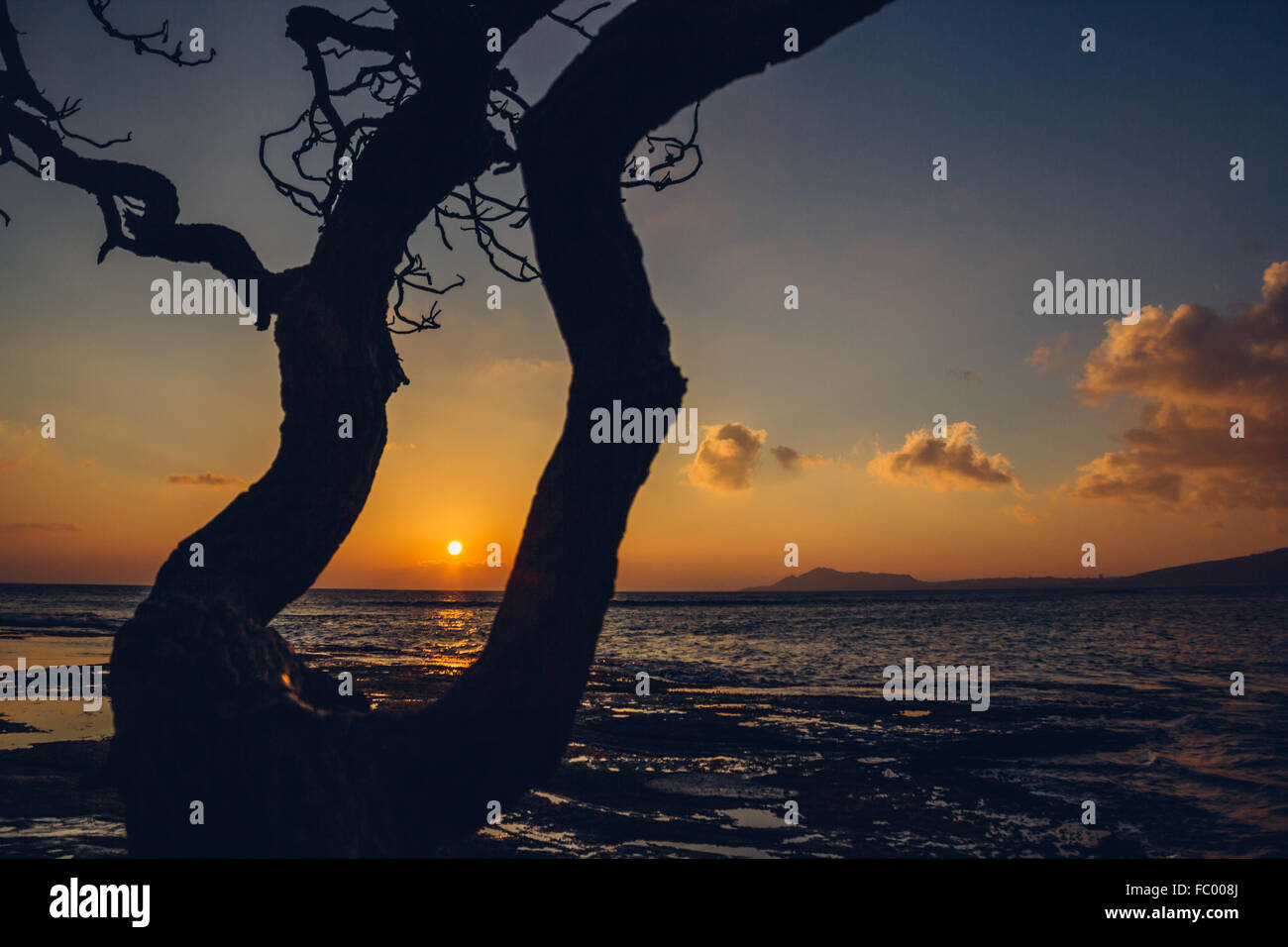 Tree silhouette at Portlock, sunset on Oahu, Hawaii, USA with horizontal composition. - Stock Image