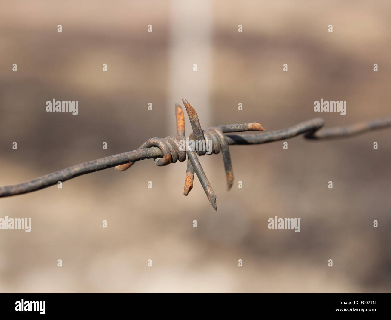 barbed wires - Stock Image