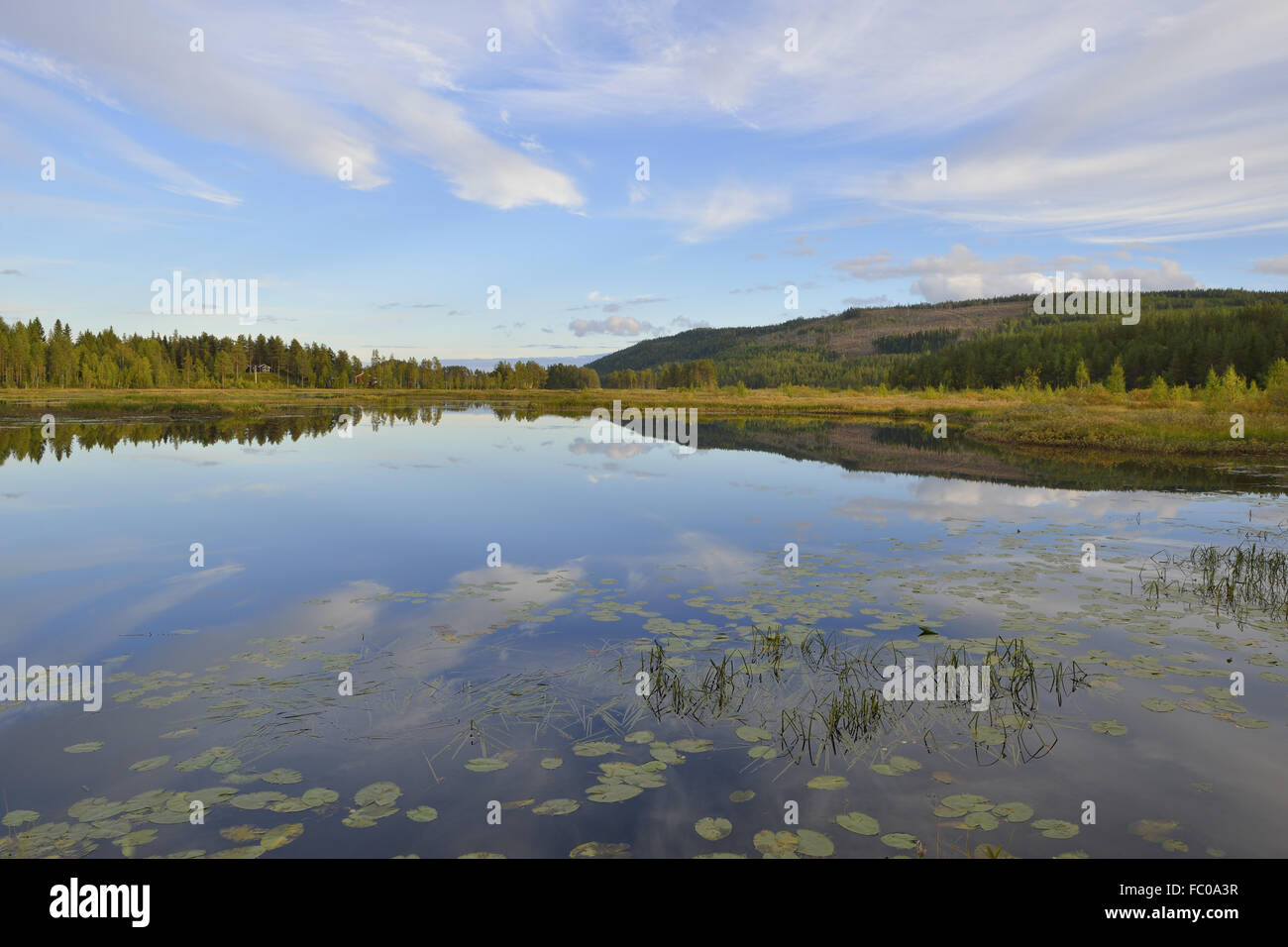 Mossatraesk Naturreservat Stock Photo