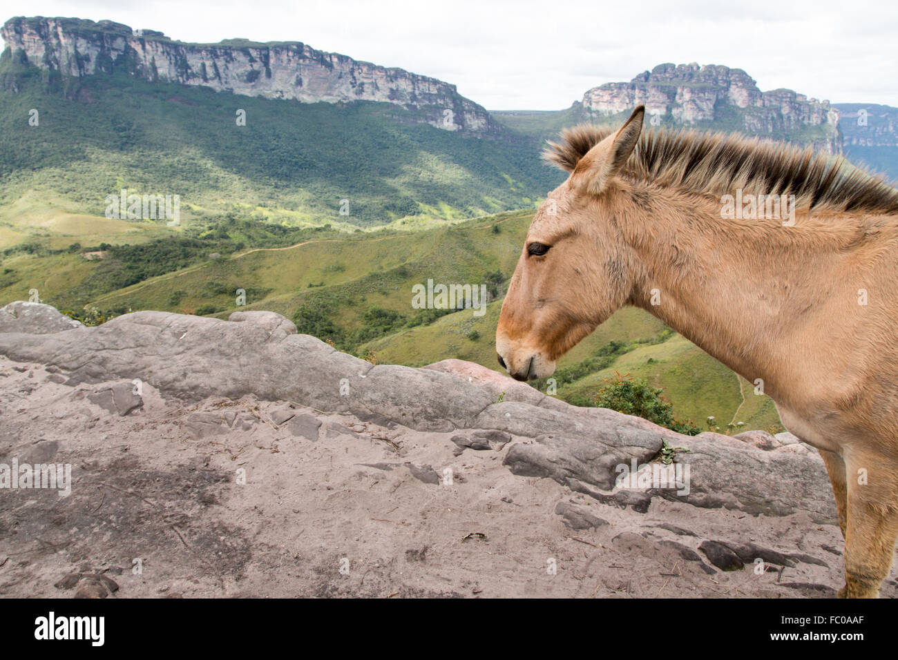 Chapada Diamantina National Parc/Vale do Pati - Stock Image
