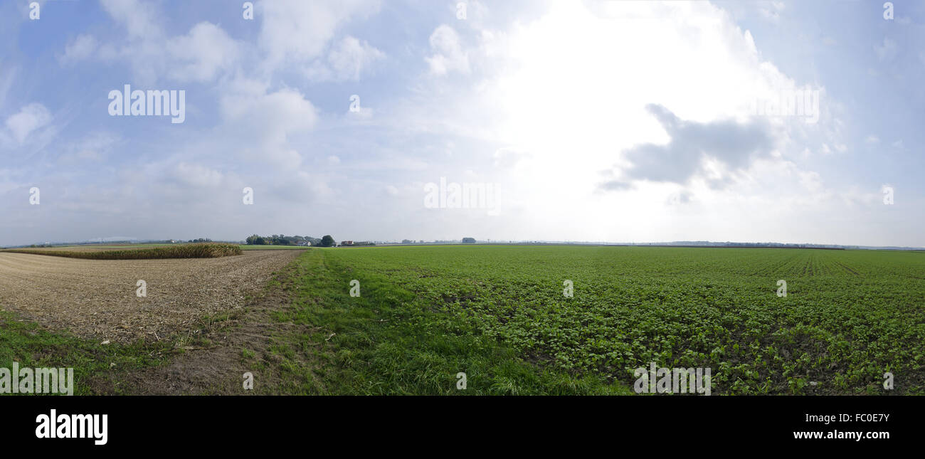 partly harvested fields until the horizon - Stock Image