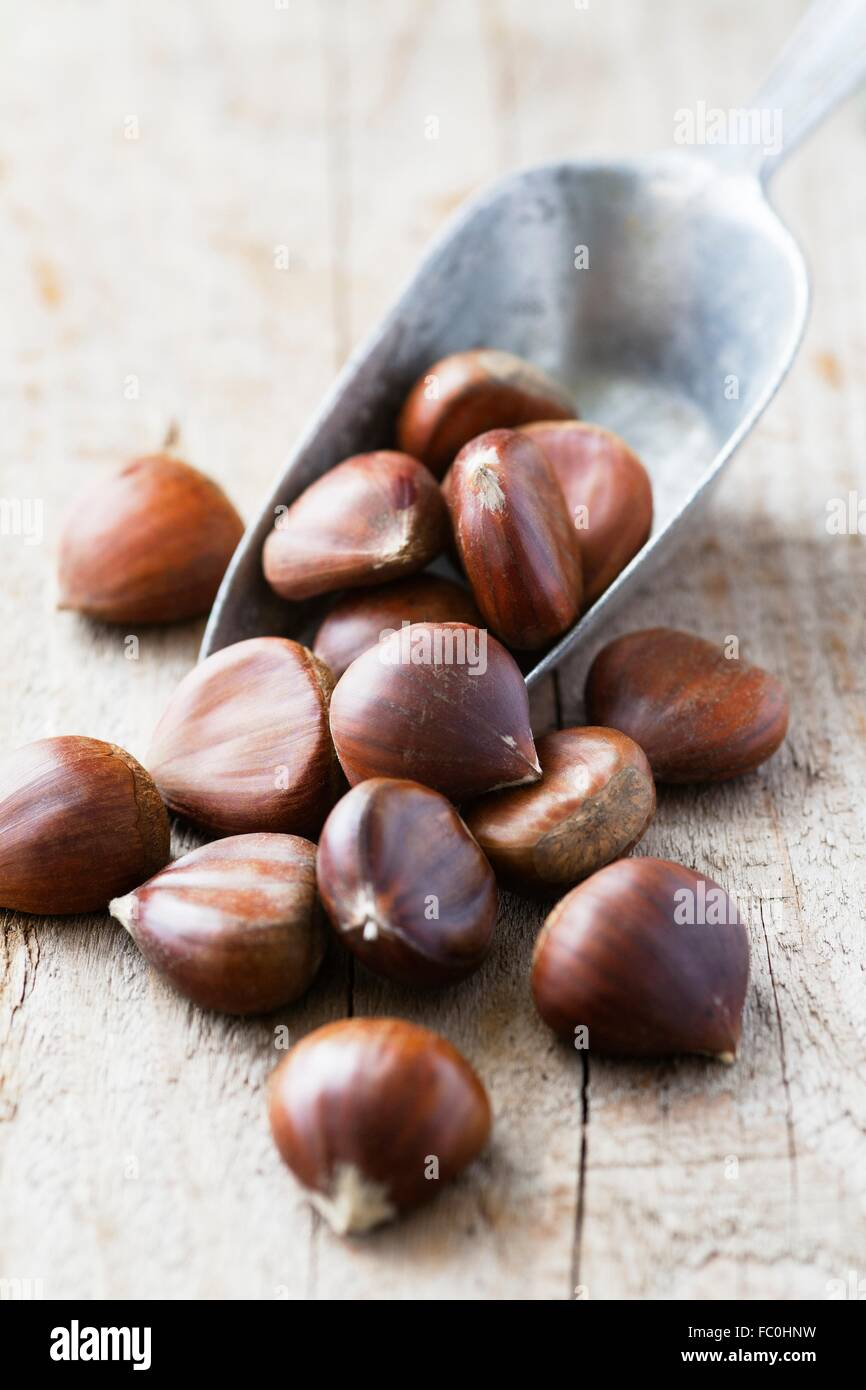 Chestnuts in a metal grain scoop Stock Photo