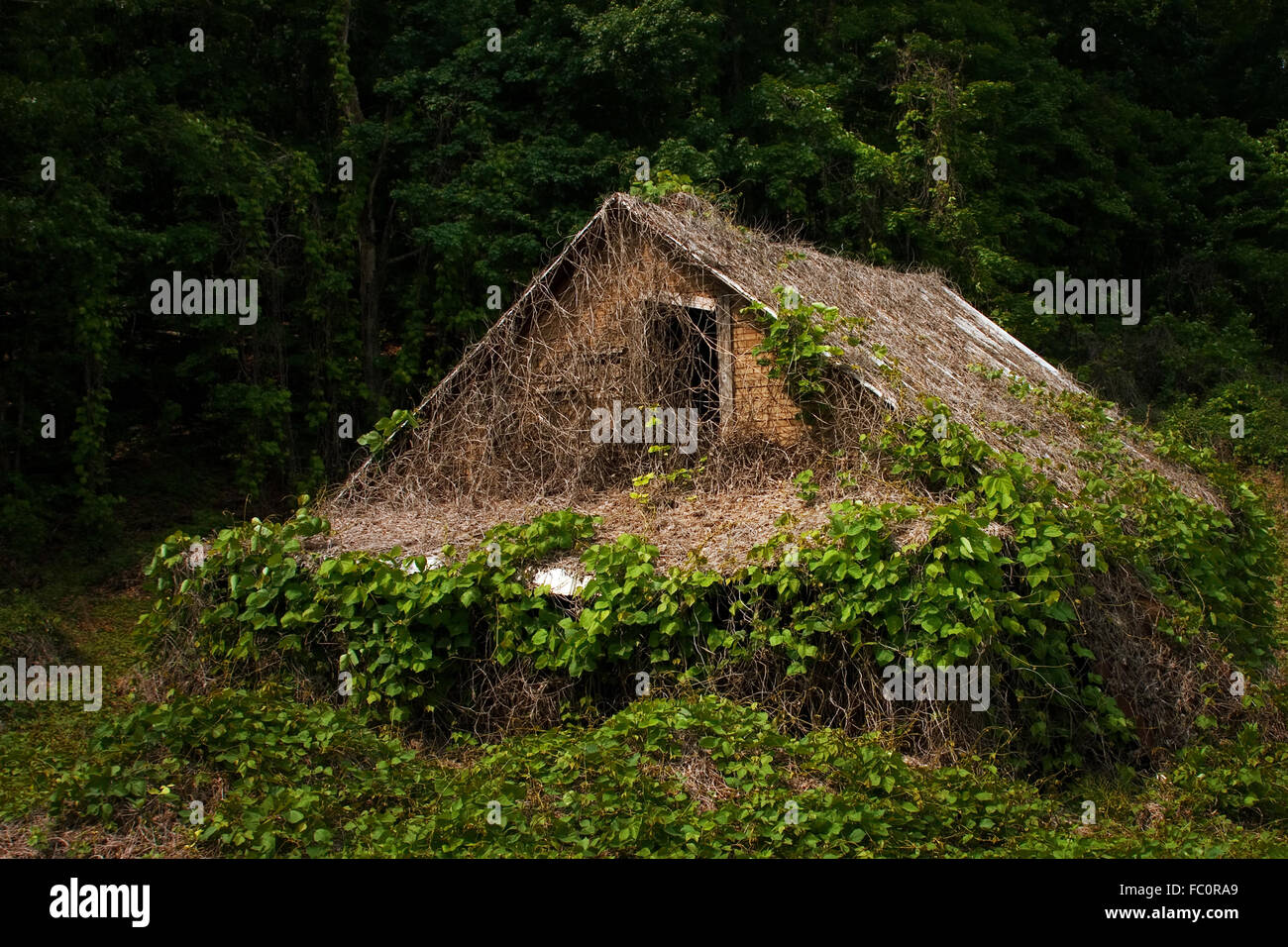 An old abandon house covered in Kudzu in North Georgia, USA. - Stock Image