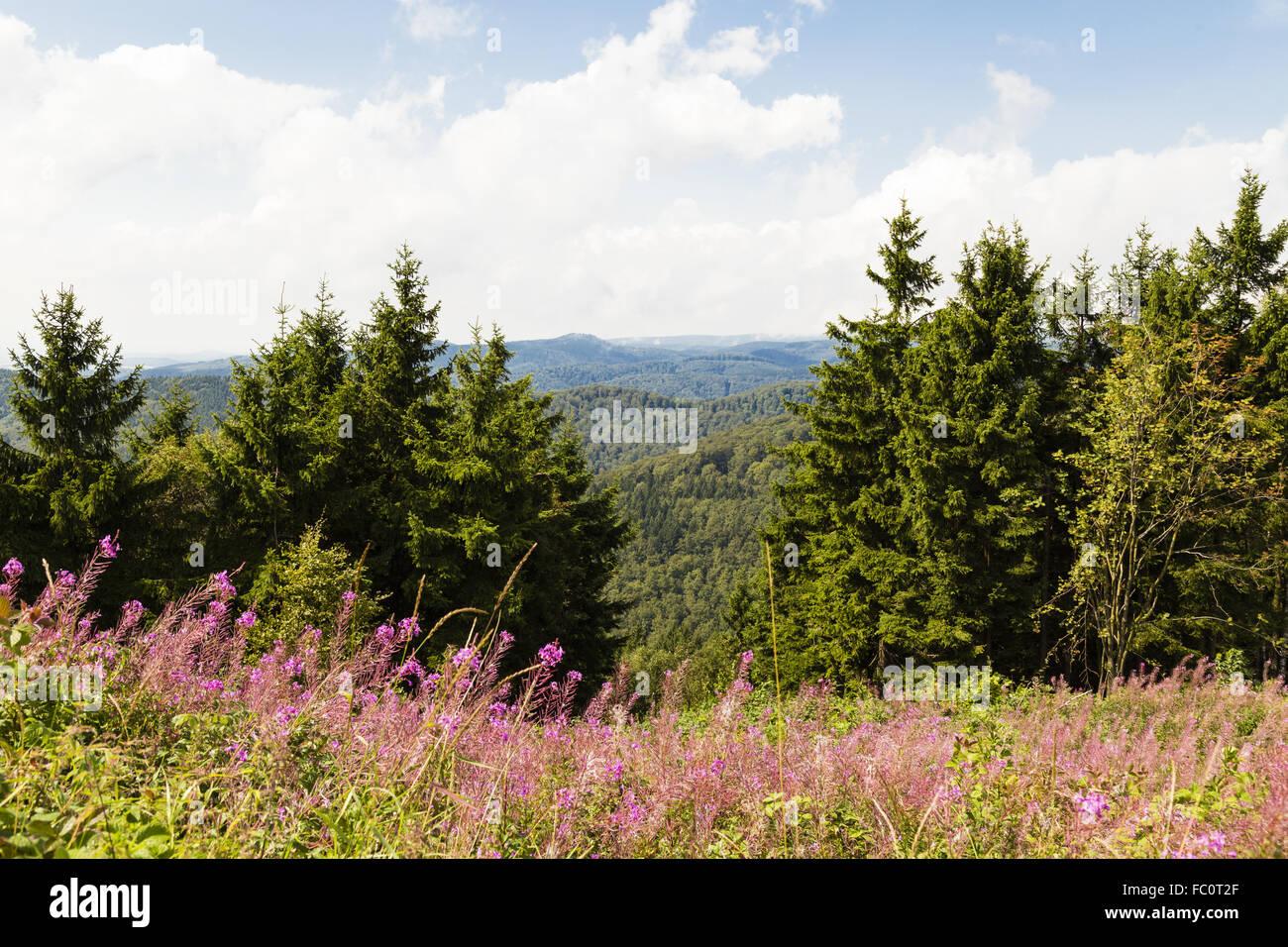 Harz, Lower Saxony, Germany - Stock Image