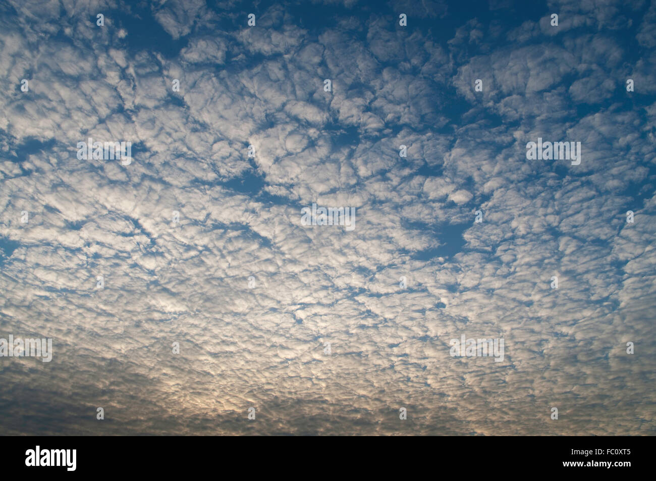 Altocumulus cloud, a middle-altitude cloud lighten by the sun rising in the east. Stock Photo