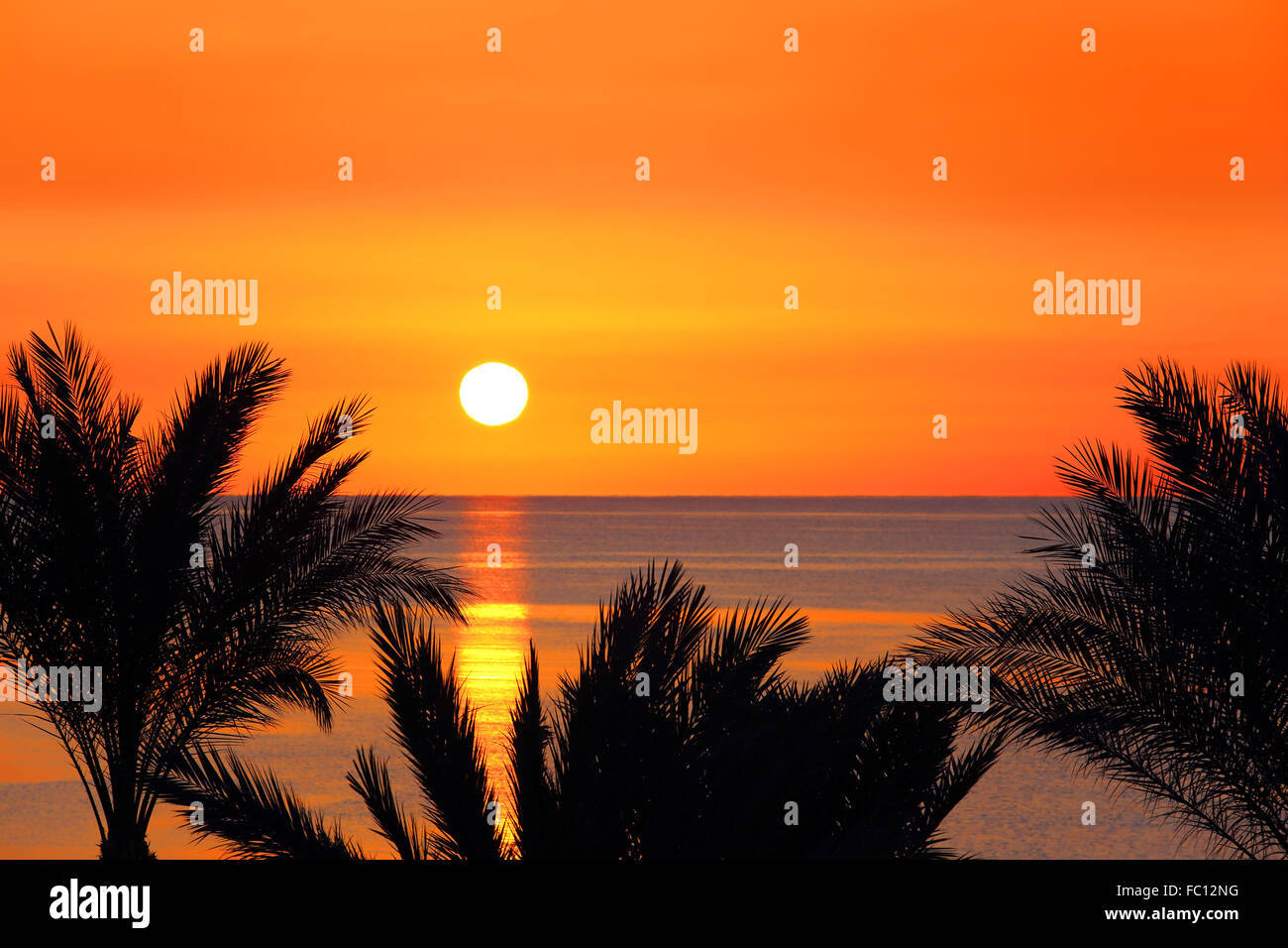 palms and sunrise over sea - Stock Image