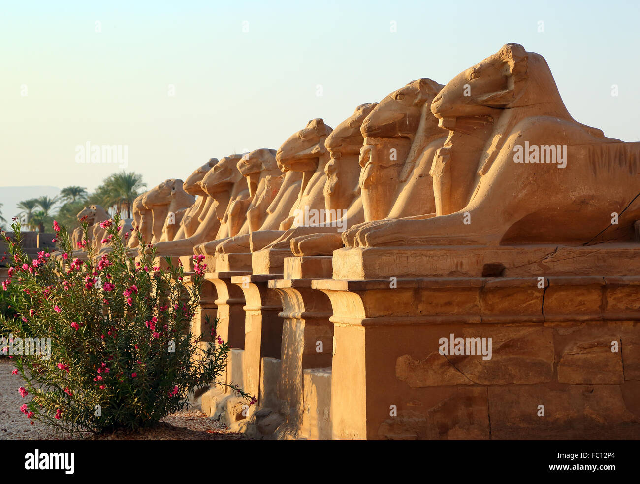 egypt statues of sphinx in karnak temple - Stock Image