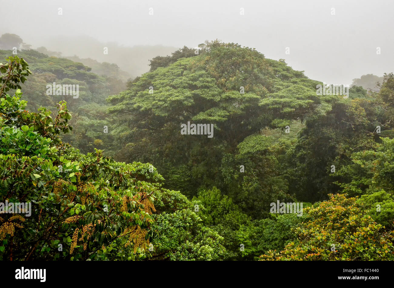 Rain forest - Stock Image
