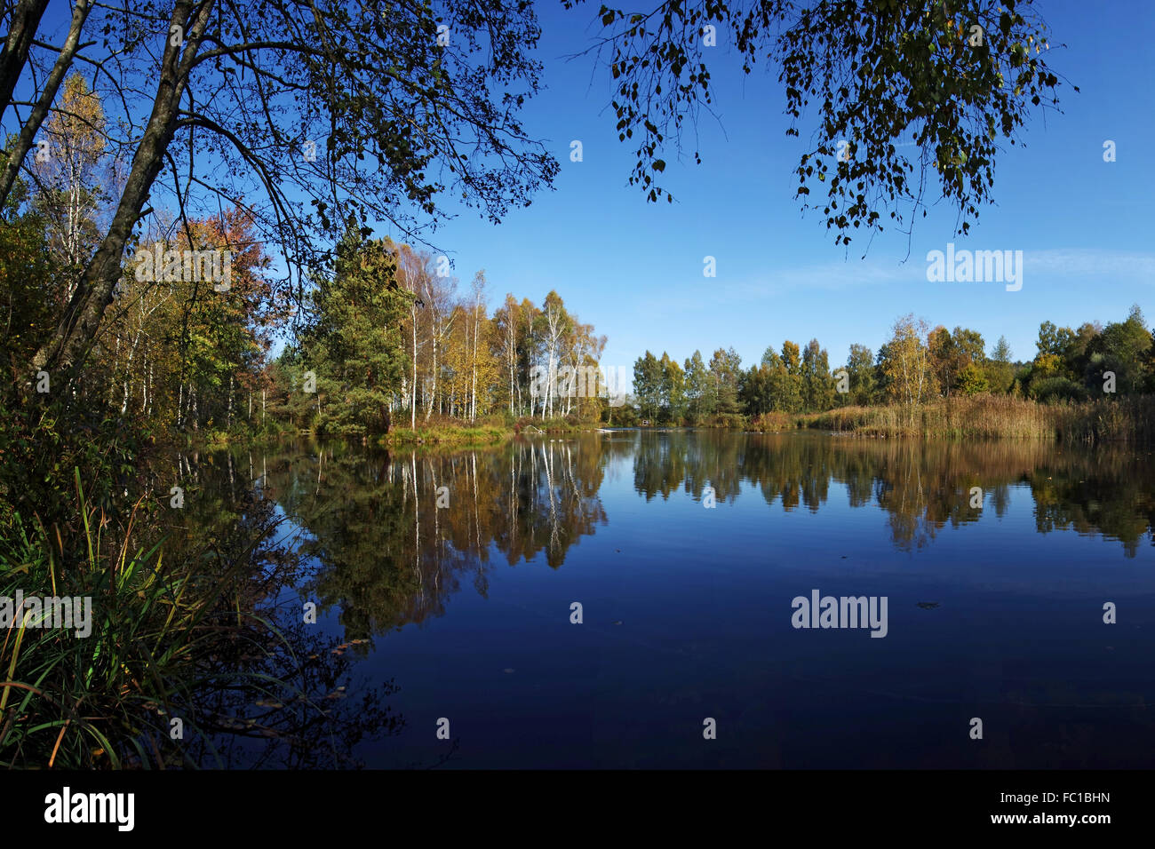 Moorland Lake in Pfrunger Ried Stock Photo