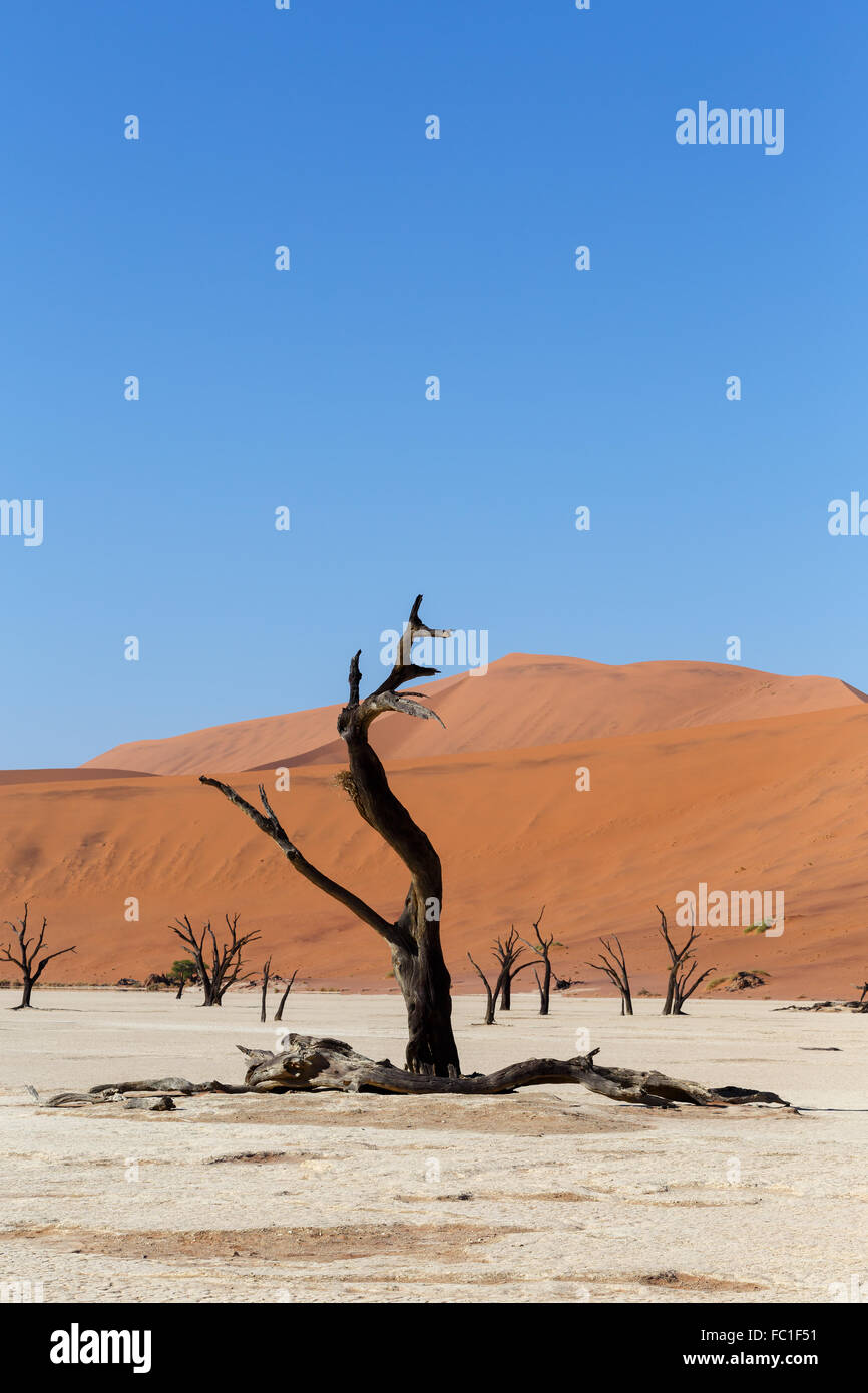 Sossusvlei beautiful sunrise landscape of hidden death valley in Namibian desert with blue sky, best place in Namibia - Stock Image