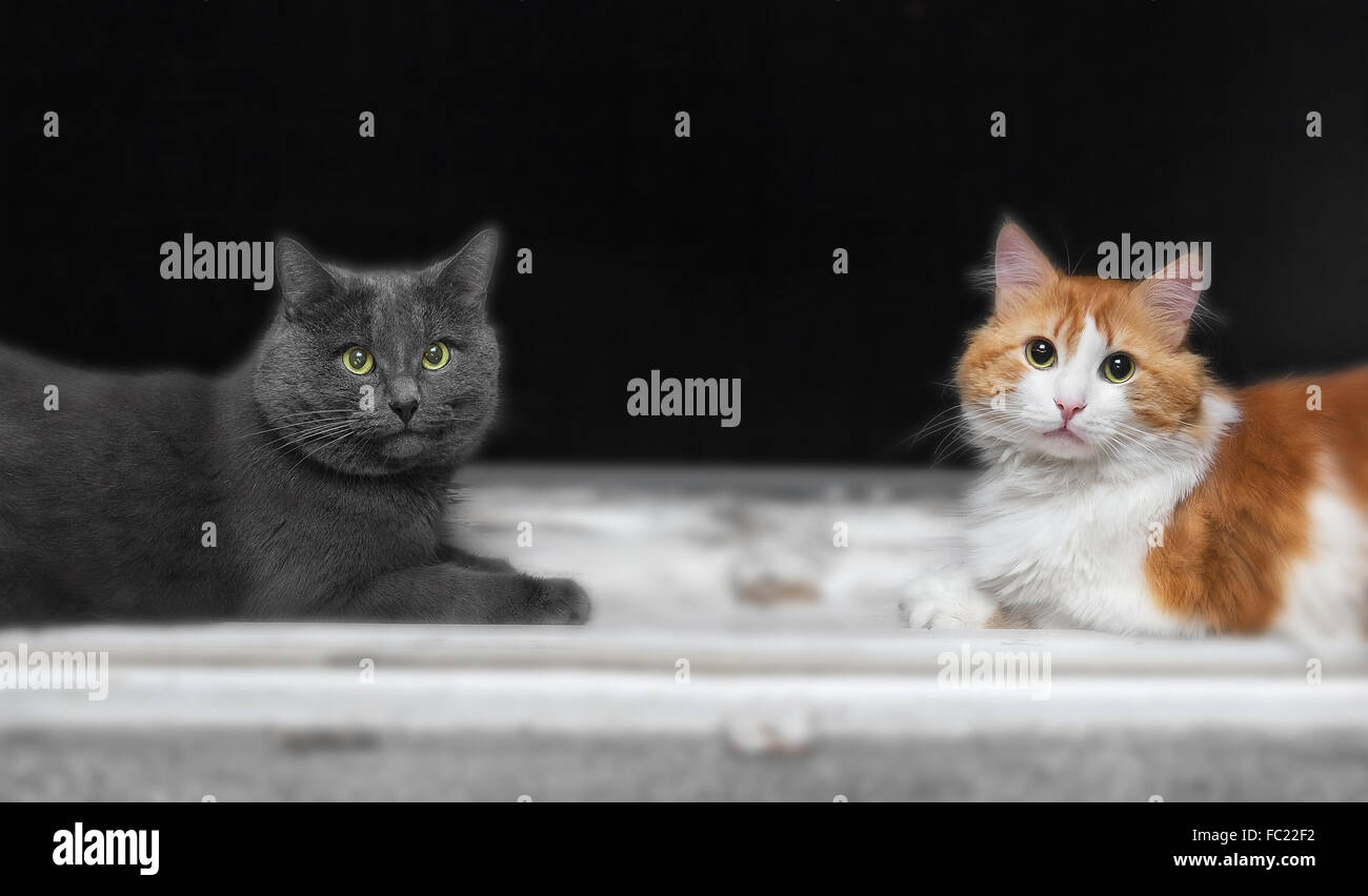 Two cats, grey and orange, on window in evening Stock Photo