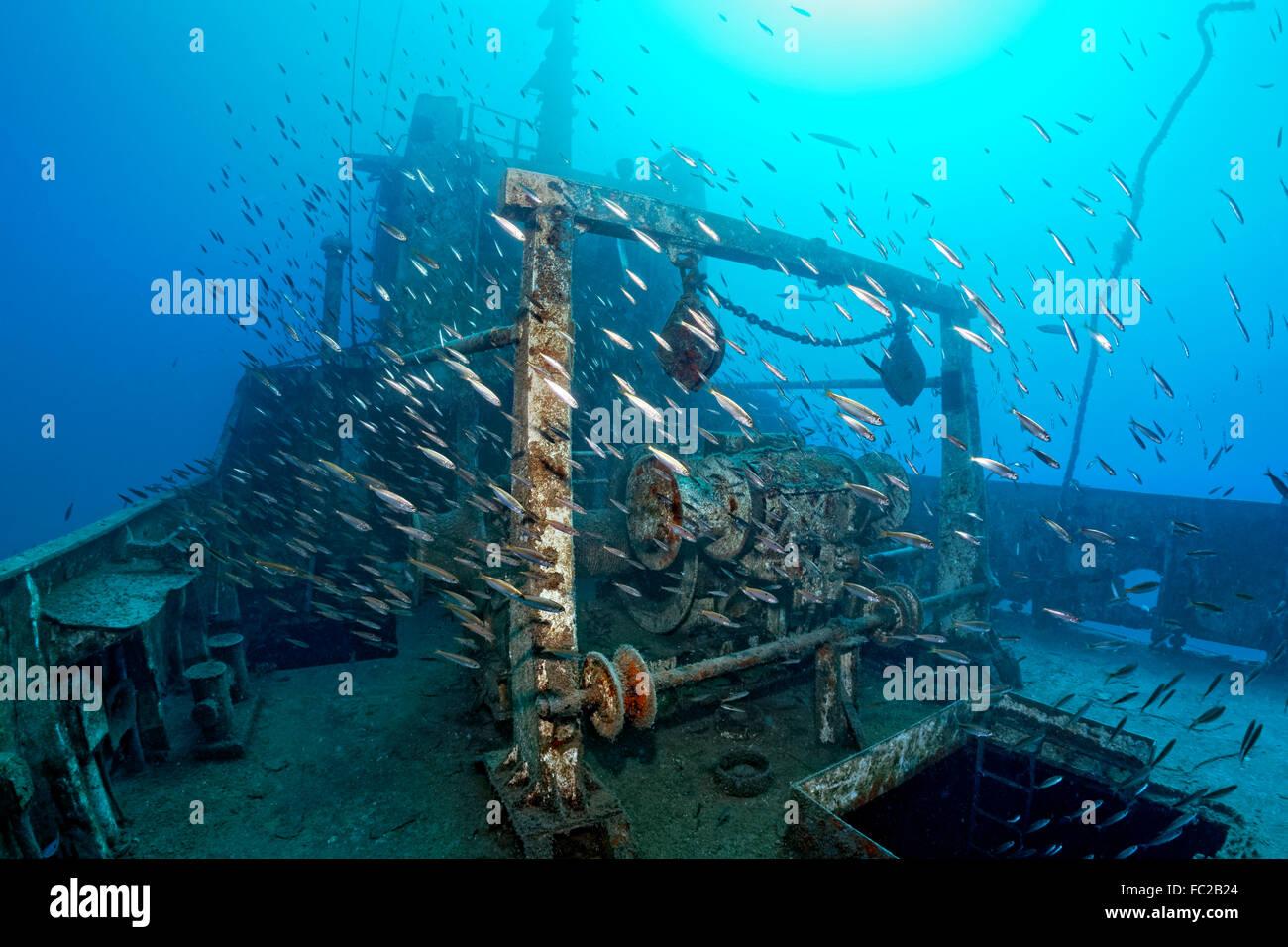 Shoal, Mediterranean horse mackerel (Trachurus mediterraneus), Shipwreck Constandis, sunk for divers, underwater - Stock Image