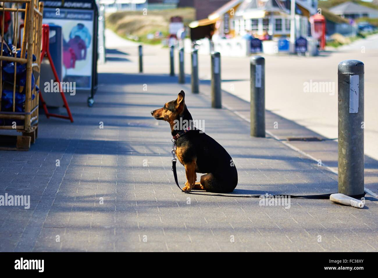 Dog Waiting for his Owner - Stock Image