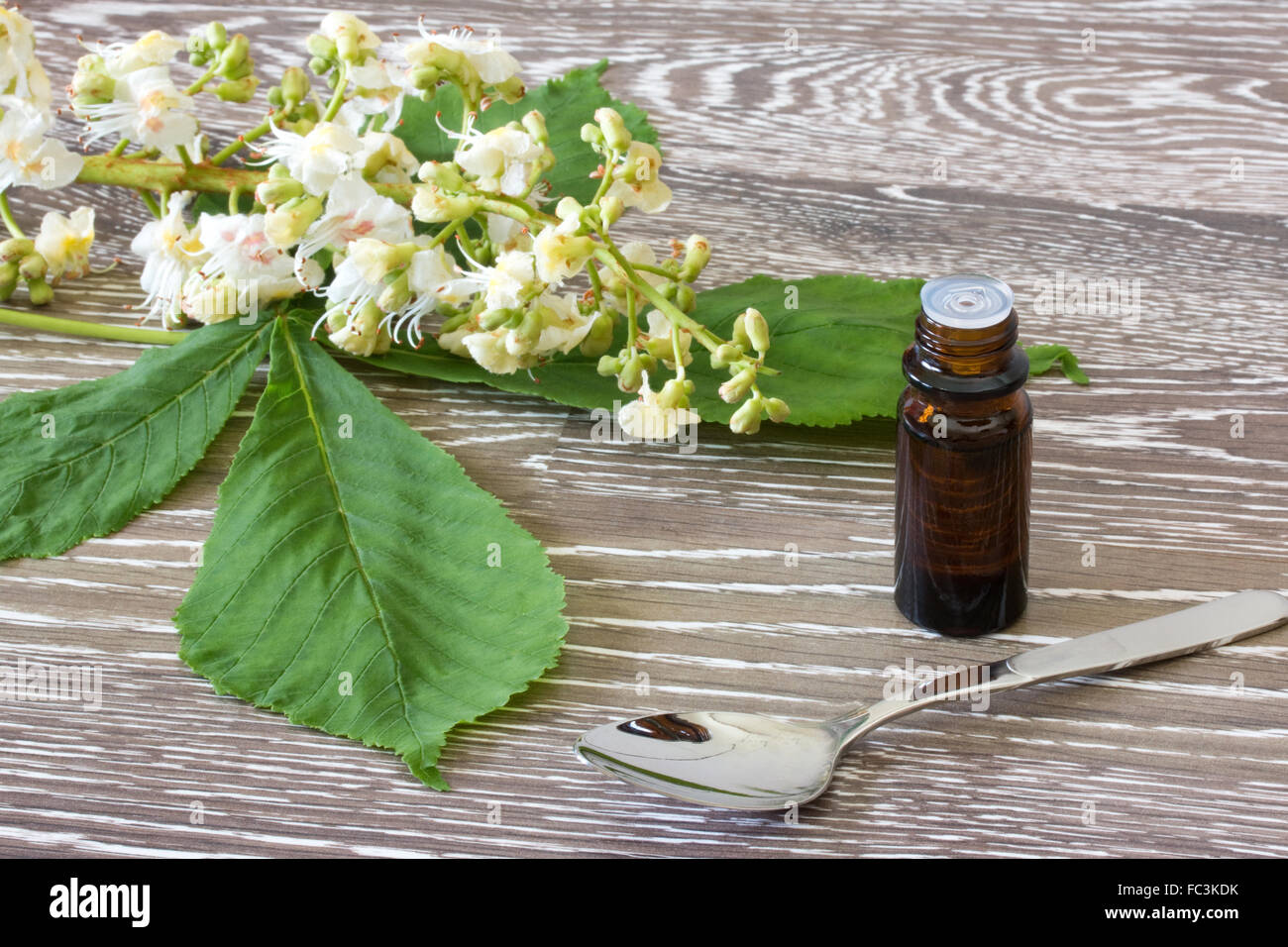 Bach flower remedies of white chestnut stock photo 93508847 alamy bach flower remedies of white chestnut mightylinksfo