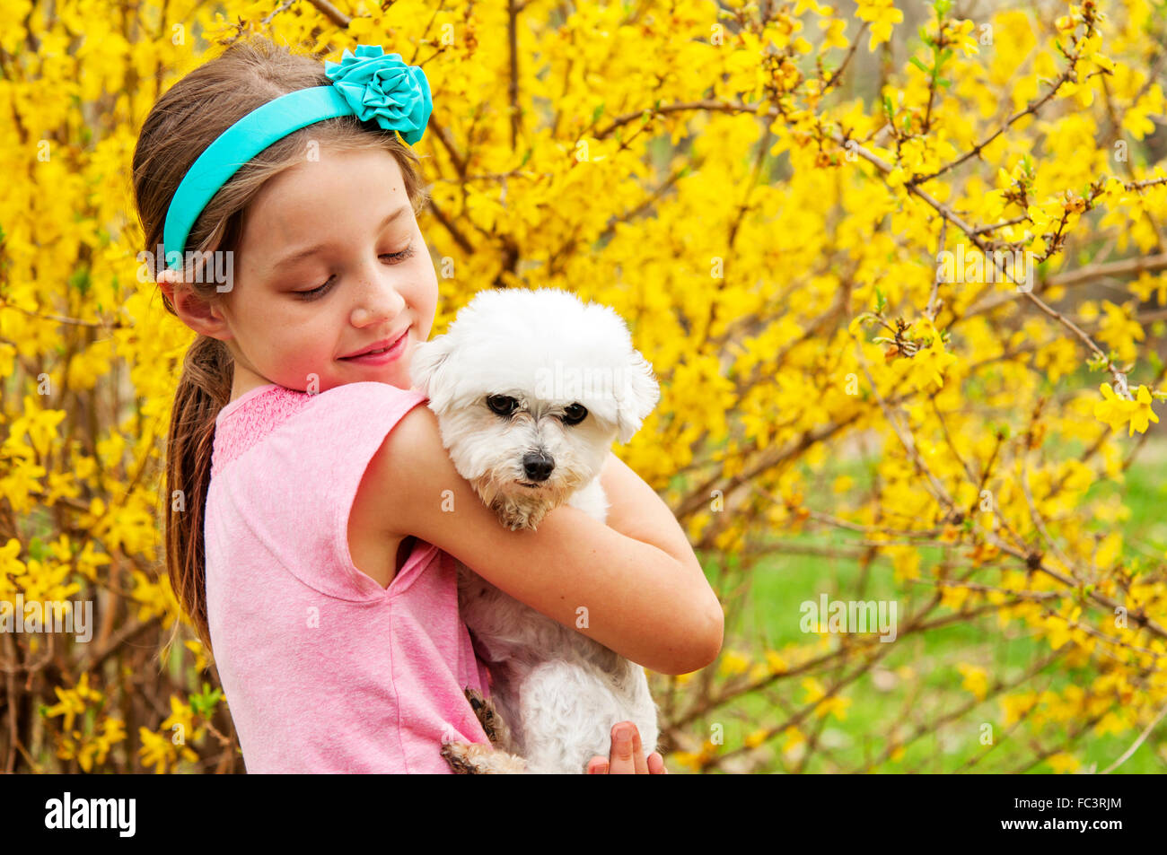 girl holding her dog by forsythia bush - Stock Image