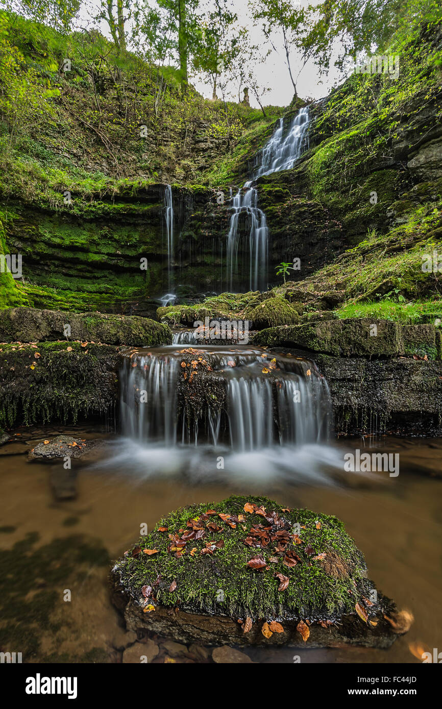 Scaleber Falls nestles in woods besides the Settle to Airton Road in the Yorkshire Dales - Stock Image