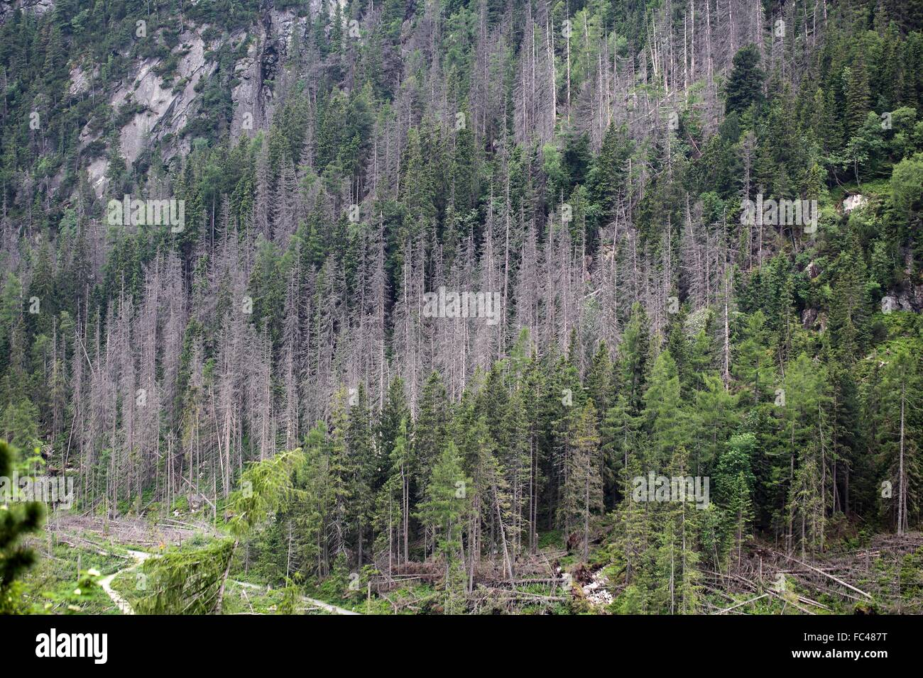 Forest Decline - Stock Image