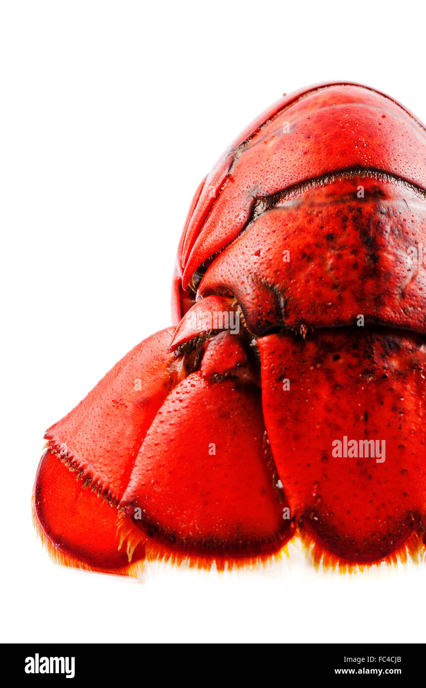 Boiled lobster isolated tail - Stock Image
