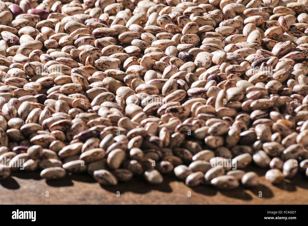 Detail of bean-Brindle - Stock Image