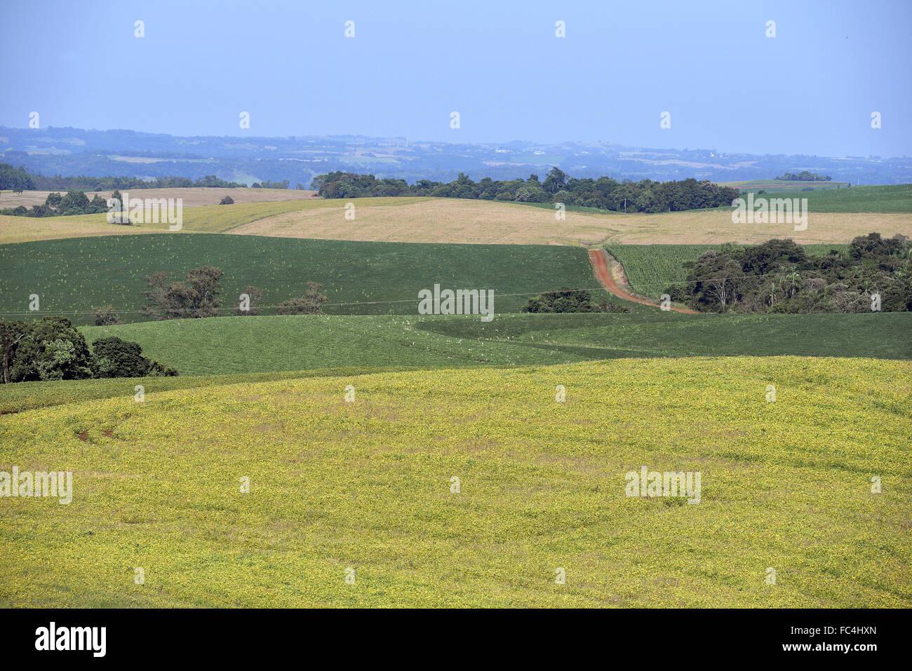 Plantação de soja na zona rural - Stock Image