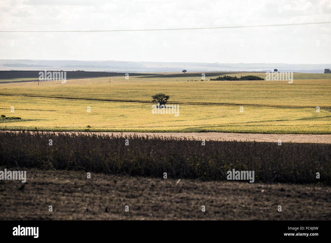 GM soy planting in the countryside - Stock Image