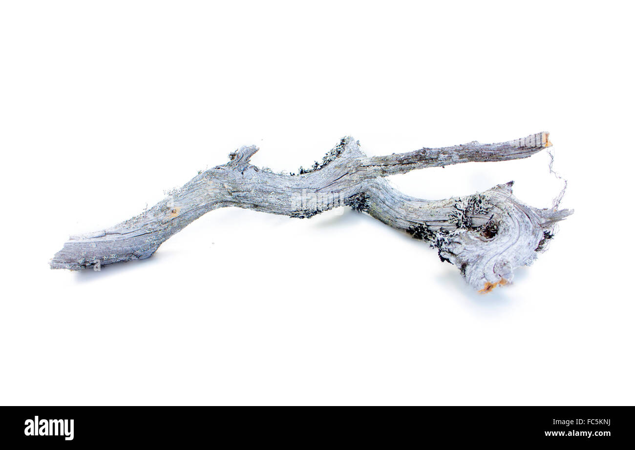 very old decrepit tree branch - Stock Image