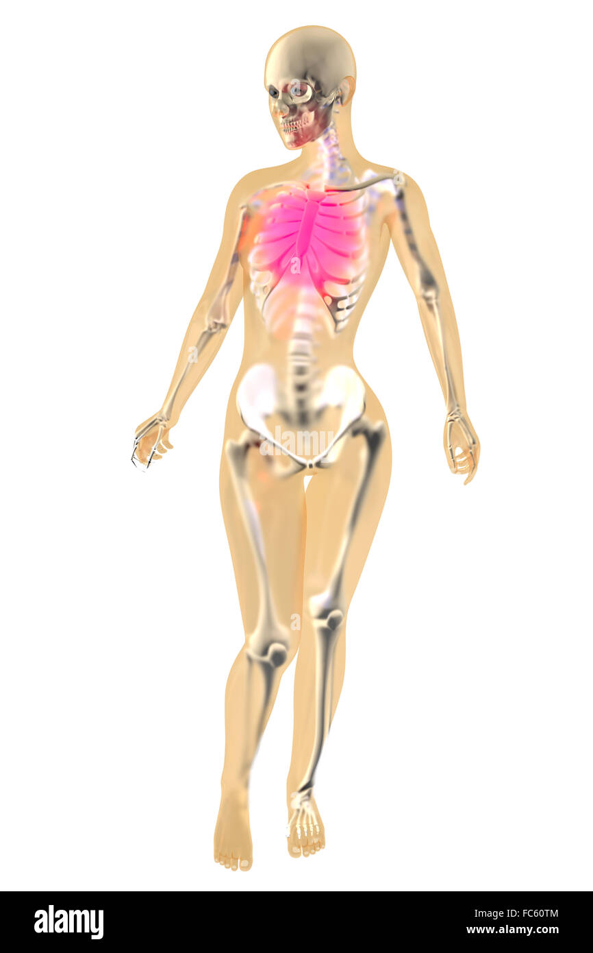 Female Anatomy - Chest pain Stock Photo: 93560116 - Alamy