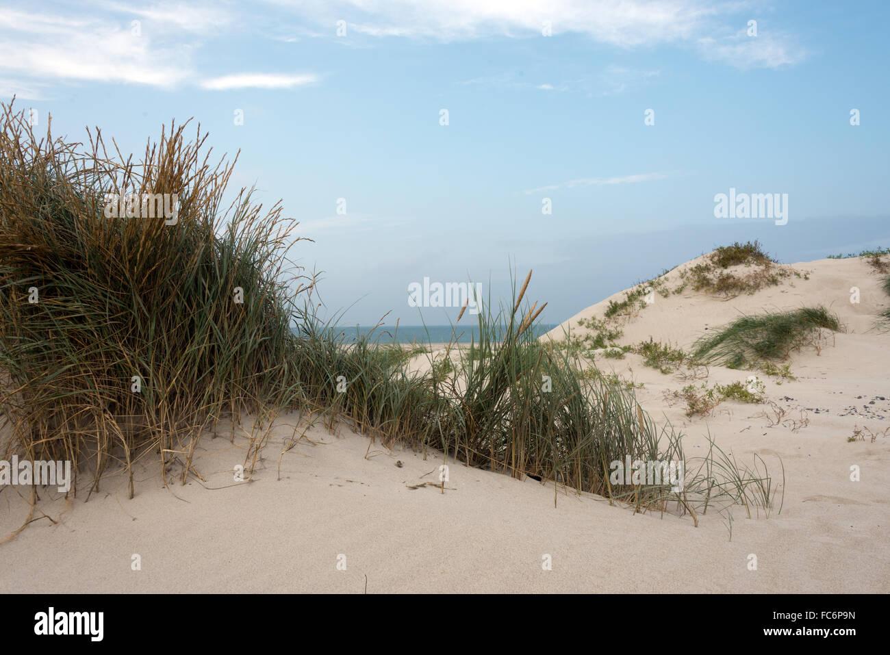 sand and marram at heligoland dune - Stock Image