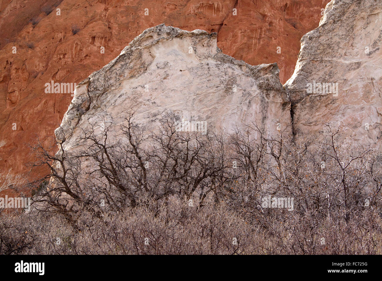 The White Lyons formation sandstone of White Rock contrasts against the red rocks of the Red Lyons formation sandstone - Stock Image