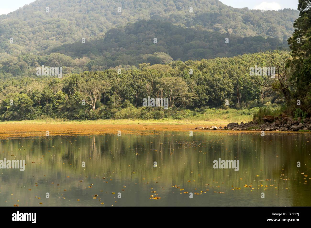 Forest and  Lake Buyan near Bedugul, Bali, Indonesia - Stock Image