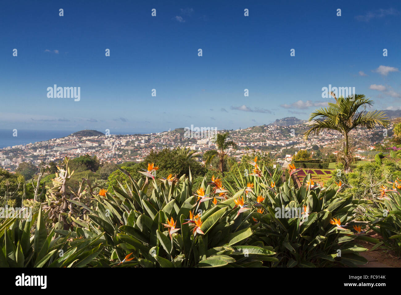 Viewpoint at the botanical garden of Funchal, Madeira - Stock Image