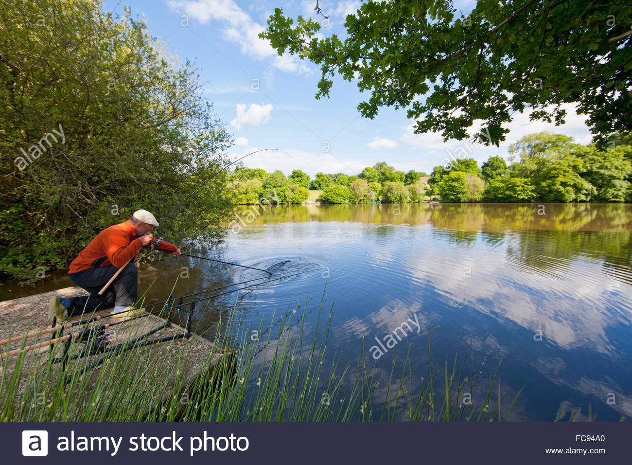Fisherman landing fish from lake caught on rod - Stock Image