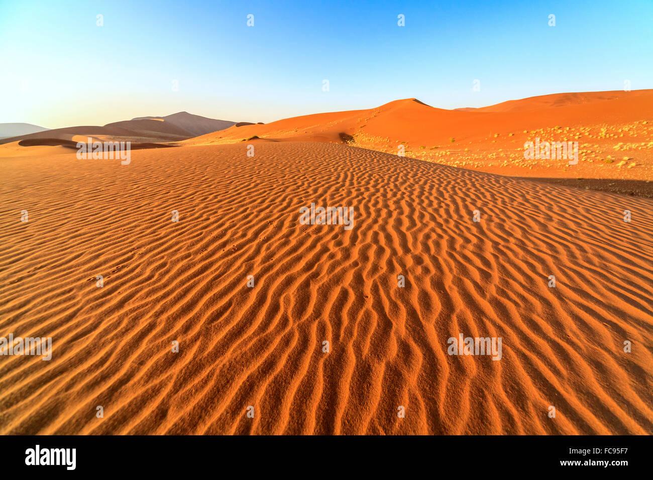 Dried plants among the sand dunes shaped by wind, Deadvlei, Sossusvlei, Namib Desert, Namib Naukluft National Park, - Stock Image