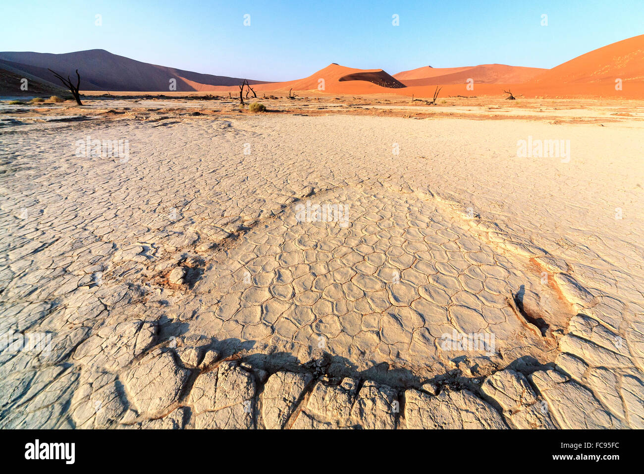 Parched ground and dead Acacia, Deadvlei, Sossusvlei, Namib Desert, Namib Naukluft National Park, Namibia - Stock Image