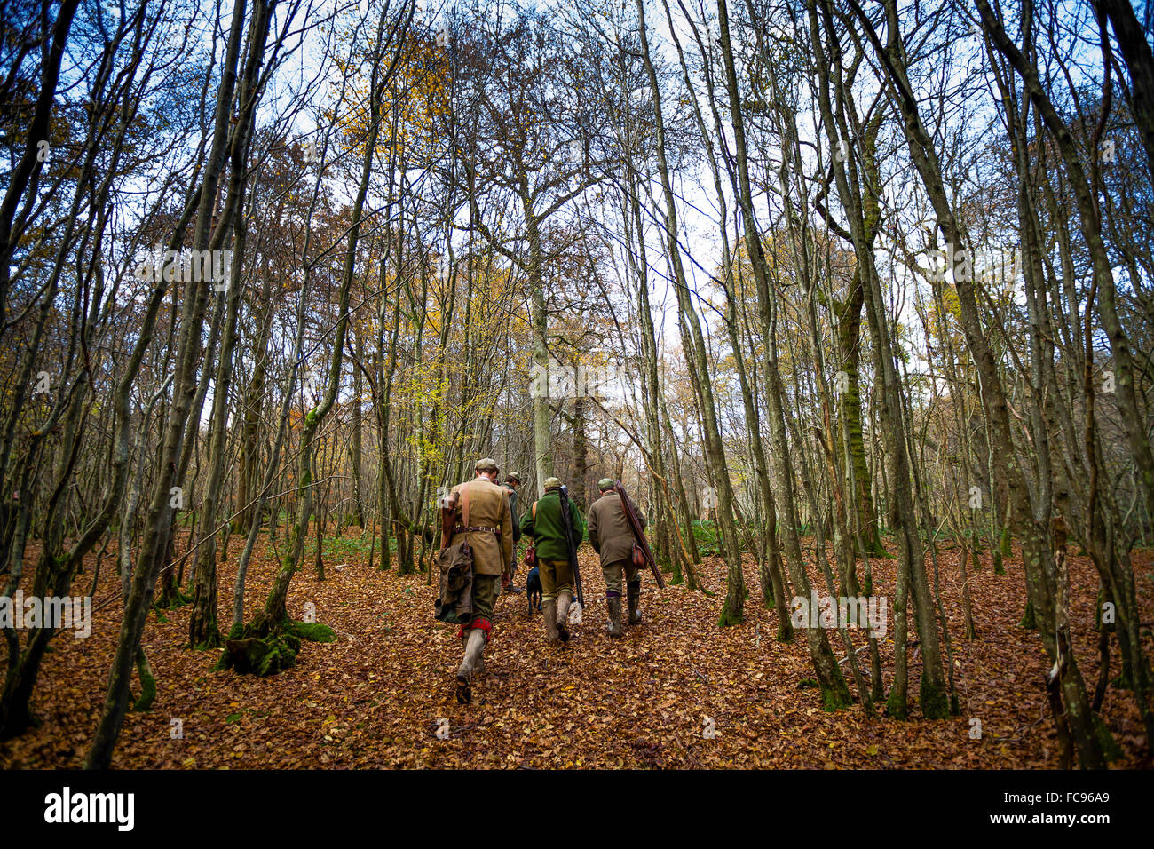 Guns walking to the next drive, Somerset, England, United Kingdom, Europe - Stock Image