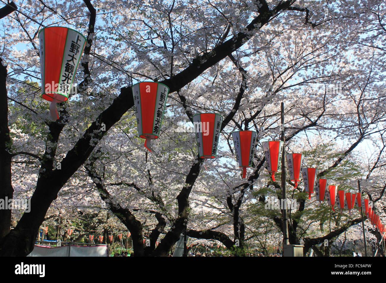 Cherry Blossoms Sakura in Tokyo, Japan. - Stock Image